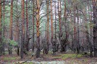 Деревья с аномальным развитием