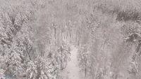 Танцующий лес. Видеосъемка с квадрокоптера.