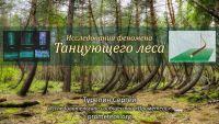 Танцующий лес – исследования (видео)