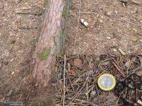 Направления изгиба деревьев Танцующий лес в Тырново