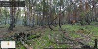 Фото-панорама Танцующего леса в Рязанской области (массив №2)